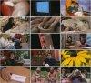 BBC: Тайны мозга / BBC: Brain Story (2000)